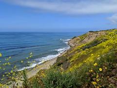 IMG_20190422_101554e (joeginder) Tags: jrglongbeach oceantrails pacific california beach rocky cliffs wildflowers hiking