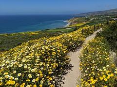 22,294 (joeginder) Tags: jrglongbeach oceantrails pacific california beach rocky cliffs wildflowers hiking