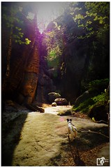 Dog in the spotlight of nature (Johannes Haupt) Tags: doginthespotlightofnature sun mountains saxonswitzerland light rays potrait pet animal hundimrampenlichtdernatur sonne berge sächsischeschweiz licht strahlen haustier tier