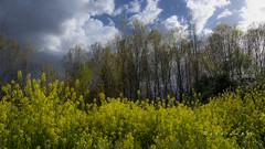 a 23 de abril..._DSC4135 (Rodo López. Fotero... instantes en un clic) Tags: elbierzo españa explore excapture nikon naturaleza nature naturalezacautivadora nostalgia naturebynikon spain sentimientos sol castillayleonesvida castillayleon cielos ngc
