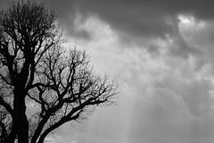 When Halloween Would Be In April (Coquine!) Tags: christianleyk london greatbritain batterseapark unitedkingdom england spring frühling primavera park wandsworth tree baum clouds wolken rays blackandwhite blackwhite schwarzweiss spooky halloween