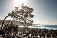 design by wind (Rafael Zenon Wagner) Tags: baum tree beach strand steine stone ocean ozean sun sonne 28mm