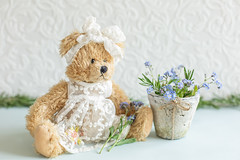 23/30: Daisy and her forget-me-nots (judi may) Tags: april2019amonthin30pictures happyteddybeartuesday teddybeartuesday teddy teddybear forgetmenots flowers flowerpot depthoffield dof bokeh tabletopphotography stilllife canon5d 50mm theweeklymonthlychallenge highkey textures