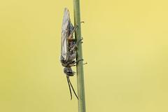 wasp? (Sebo23) Tags: makrofotografie macro makro bug käfer insekt insect naturaufnahme nature natur canon10028l canoneosr