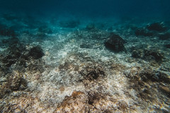 GOPV25140 (waychen_c) Tags: philippines ph visayas centralvisayas bohol provinceofbohol balicasag balicasagisland sea seascape coralreef coral cebutour2019 gopro goprohero7black 菲律賓 維薩亞斯 維薩亞斯群島 中維薩亞斯 保和 保和省 保和海 珊瑚礁 珊瑚 海龜 綠蠵龜 greenseaturtle turtle seaturtle 2019宿霧旅行 南洋