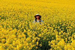 Yellow (Croydon Clicker) Tags: field countryside rapeseed yellow woman flowers spring harvest bright hat tatsfield surrey