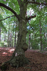 Bogensee_(CP) - 404 (sigkan) Tags: deutschland brandenburg bogensee lostplaces nikoncoolpixp520 vondetkanaccount