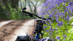 IMG_9287a (Photopedaler) Tags: cornishcycling countrylanes bluebells bicycle backroads springsunshine springcycling springflowers bokeh