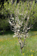 IMG_1463 (Pigeon Travels) Tags: 2019 arboretum california flowers garden nature santacruz trees ucsantacruzarboretum