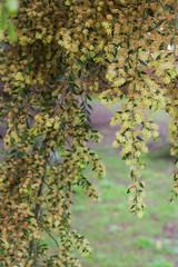 IMG_1364 (Pigeon Travels) Tags: 2019 arboretum california flowers garden nature santacruz trees ucsantacruzarboretum