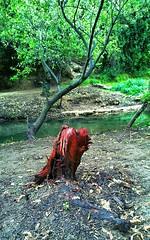 (tetuani1399) Tags: national coth5 water tree nature white green landscape park agua árbol naturaleza blanco verde paisaje parque river rio montaña monte montana mountain trekking senderismo