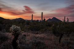 Arizona Desert Sunrise (MichellePhotos2) Tags: arizona desert cactus nikon d850 nikond850 prime 35mm sunrise lostdogwashtrail scottsdale