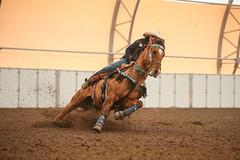 Jennifer (wysharp) Tags: barrelracing cowgirl horse