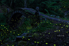 D68_5705 (brook1979) Tags: 新北市 石碇 長生橋 橋 舊 古 螢火蟲 燈 光 夜晚 春天 newtaipei night firefly lights bridge taiwan