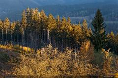 Beskydské ráno (jirka.zapalka) Tags: beskydy czechrepublic morning landscape zlinskykraj zlinregion zlinsko hornibecva forest morninglight spruce trees nikond700 sigma7020028 spring