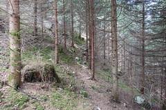 Forest @ Hike to Château de Menthon, Rochers des Moillats & Ermitage de Saint-Germain (*_*) Tags: 2019 printemps spring april afternoon europe france hautesavoie 74 annecy hiking mountain montagne nature randonnee walk marche bornes savoie bluffy trail sentier forest