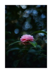 2019/3/21 - 2/15 photo by shin ikegami. - SONY ILCE‑7M2 / Lomography New Jupiter 3+ 1.5/50 L39/M (shin ikegami) Tags: sony ilce7m2 sonyilce7m2 a7ii 50mm lomography lomoartlens newjupiter3 tokyo sonycamera photo photographer 単焦点 iso800 ndfilter light shadow 自然 nature 玉ボケ bokeh depthoffield naturephotography art photography japan earth asia