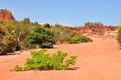 Antsanitia, Madagascar (Olivier Nery 974) Tags: antsanitia madagascar océanindien indianocean falaise tsingy rouge oliviernery
