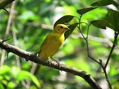 (Bruja Camilla) Tags: birds animals wildlife