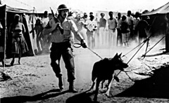 South Africa /Police op.in Soweto 1986. (shopperholla) Tags: colouredpeople coloredpeople photography history rifle gun police policedog southafrica southernafrica weapon racialconflict johannesburg racialsegregation apartheid soweto republicofsouthafrica