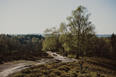 sundays   l   2019 (weddelbrooklyn) Tags: natur landschaft heidelandschaft baum bäume wandern hügel frühling schleswigholstein nikon d5200 treckingtour hiking nature landscapes germany northerngermany tree trees moorland hills spring