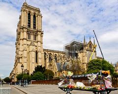 Des fleurs pour Notre-Dame (L'Abominable Homme de Rires) Tags: notredamedeparis paris travel cathédrale canon5d 5dmkiii sigma 24105mmf4 dxo lightroom photolab incendie fleur