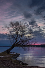 The Summerfolk Tree. (cindiefearnall) Tags: dawn tree summerfolk landscape landscapephotography owensound kelsobeach georgianbay greycounty bluelight sunrise bluehour silhouette cindiefearnall lakehuron