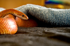 Photo (BadSoull) Tags: photo europe czech republic sony a6300 mirrorless 2019 colors colorfull animal snake pet cute prague