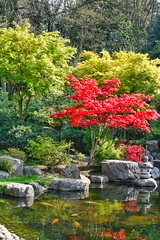 Holland Park - Kyoto Garden (gary8345) Tags: britain uk snapseed london londonist 2019 england unitedkingdom greatbritain