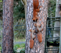 Family excursion (Patricia Buddelflink) Tags: garden nature squirrel animal