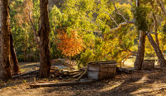 Country scene in autumn (dmunro100) Tags: autumn adelaidehills cudleecreek rural countryscene easter southaustralia