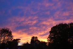 An evening glow in the sky (Kirkleyjohn) Tags: sunset sun sky evening eveninglight clouds trees treessilhouettes treesilhouettes house chimneys light