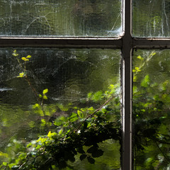green window (Francisco (PortoPortugal)) Tags: 0772019 20141025fpbo3885 janela window greens verdes natureza nature quadrada square