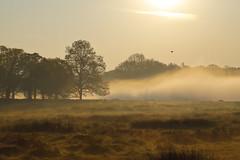 _T6A6042REWS In the Mist, © Jon Perry, 20-4-19 zbq (Jon Perry - Enlightenshade) Tags: mist fog richmondpark dawn morning jonperry enlightenshade arranginglightcom
