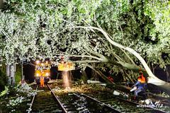 Baum stürzt auf Bahngleise in Kriftel 24.04.19 (Wiesbaden112.de) Tags: bahn baumaufbahnstrecke db dennisaltenhofen hilfeleistung sturmschaden thw unwetter wiesbaden112