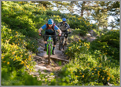 Singletrack Garden (Photo-John) Tags: utah singletrack mtb bike bikes cycling ride wildflowers mountainbike mountainbiking mountainbikers flowers green spring ogden ogdenvalley outdoors adventure sports action trail wasatchmountains biking actionsports editorialphotography stockphotography stockphoto sportsphotography actionphotography travel canon 7dmarkii 7dmkii