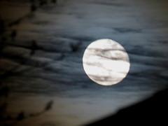 IMG_8957 (kennethkonica) Tags: moon canon canonpowershot indianapolis indy indiana luna hoosier random global usa midwest america kennethkonica lowlight sky