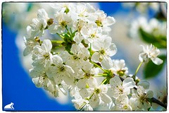Frühling 2019 (RiesenFotos) Tags: frühling blüten primavera printemps spring riesenfotos 2019