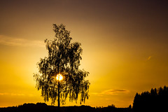 Sunrise Tree (stefan.bayer) Tags: sb sunrise tree baum sonne sonnenaufgang aufgang sun rise wald outline umriss allgäu friesenhofen leutkirch 88299