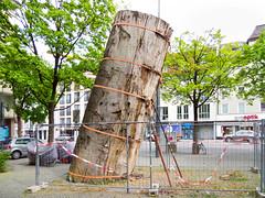 """""""Torre Pendente"""", der """"Schiefe Turm von Piesing"""" (Wolkenkratzer) Tags: art giesing obergiesing munich münchen tree mahogany"""