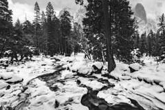 Snow Mountains & Creeks (lycheng99) Tags: snow snowmountain snowing creek yosemite yosemitenationalpark yosemitevalley water waterfall trees blackandwhite monochrome nature winter cold freezing landscape explore travel nationalpark