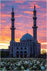 Essalam mosque Rotterdam on a gorgeous morning (Rob Schop) Tags: singleexposure mosque rotterdam rotterdamzuid sunrise zuidholland burningsky fireinthesky red backlight tulips culture sony55210oss sonya6000 nofilters