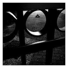 love behind the fence (Armin Fuchs) Tags: arminfuchs würzburg lavillelaplusdangereuse pigeons fence square light animal holes diagonal huawei smartphone hff
