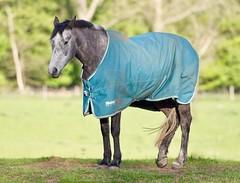 Grey (Nigel Musgrove-2.5 million views-thank you!) Tags: grey horse coat