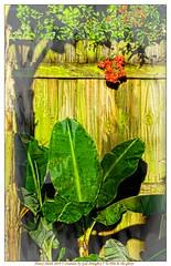 Happy Fence Friday (NancySmith133) Tags: fences fencefriday happyfencefriday centralfloridausa
