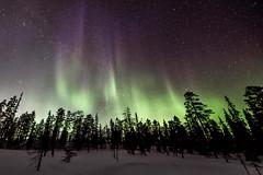 Finnland 2019 (Stefan Giese) Tags: nikon d750 finnland finland lappland samyang walimex walimex14mmf28 14mm polarlicht nordlicht auroraborealis aurora northernlight