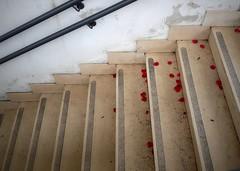 Perchè un amore debba finire (Aellevì) Tags: petali scala rosa rosso gradini quandofinisceunamore cocciante