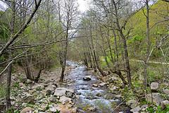 Το ρέμα που περνάει δίπλα από τον νερόμυλο του Ωραίου (ritvank) Tags: ρέμα ξάνθη ροδόπη stream oreo xanthi rhodopes outdoor pp5125 ωραίο tree δέντρο