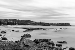 Mare Tranquillitatis (JustAddVignette) Tags: trees australia beach cloudmotion clouds cloudy cloudysunrise headlands landscapes longexposure newsouthwales newport ocean rockpool rocks sand seascape seawater seaweed sky smoothwater sydney water