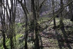 Newcastleton / Scotland 2019 (Svenek) Tags: newcastleton scotland forest trees m50 canon canonm50 canoneosm50